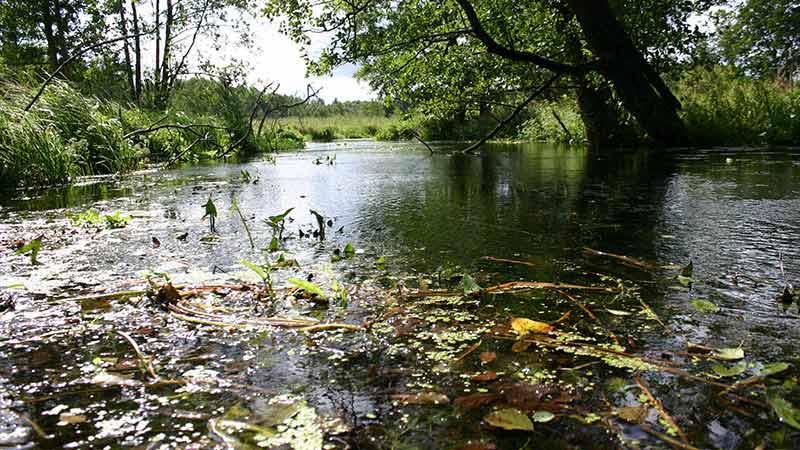 Spływy kajakowe - szlak Łaźnej Strugi