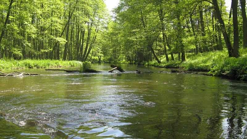 Spływy kajakowe - szlak Rospudy