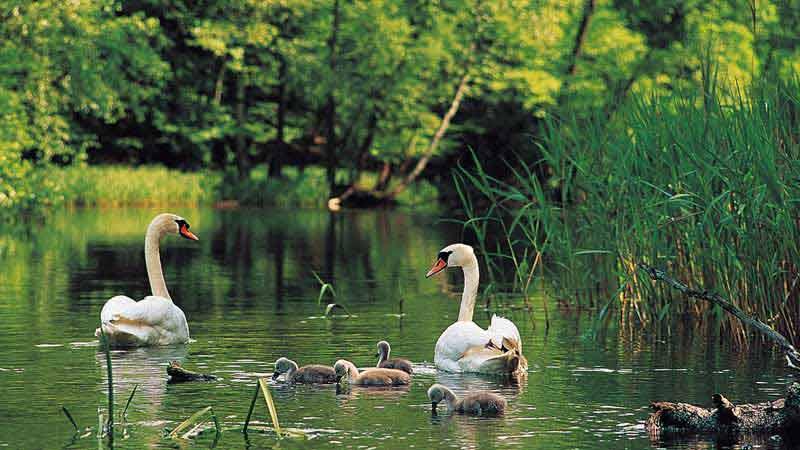 Krutynia - spływy kajakowe w otoczeniu chronionej przyrody