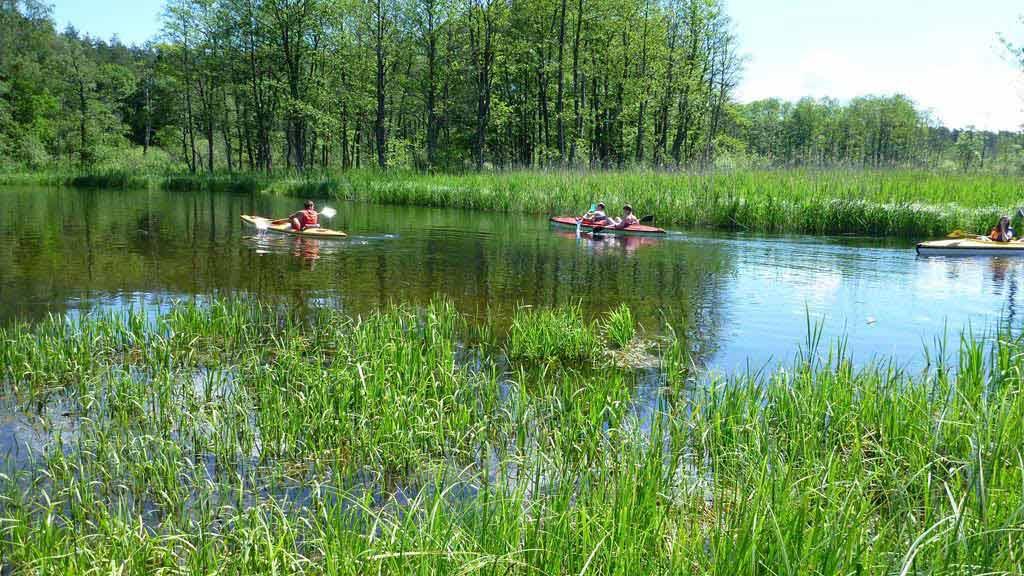 Spływ kajakowy Krutynią -  kajaki w rezerwacie Krutynia Dolna
