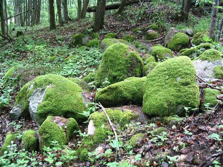 Ścieżka przyrodnicza Rosocha-Wojnowo - głazowisko na morenie czolowej