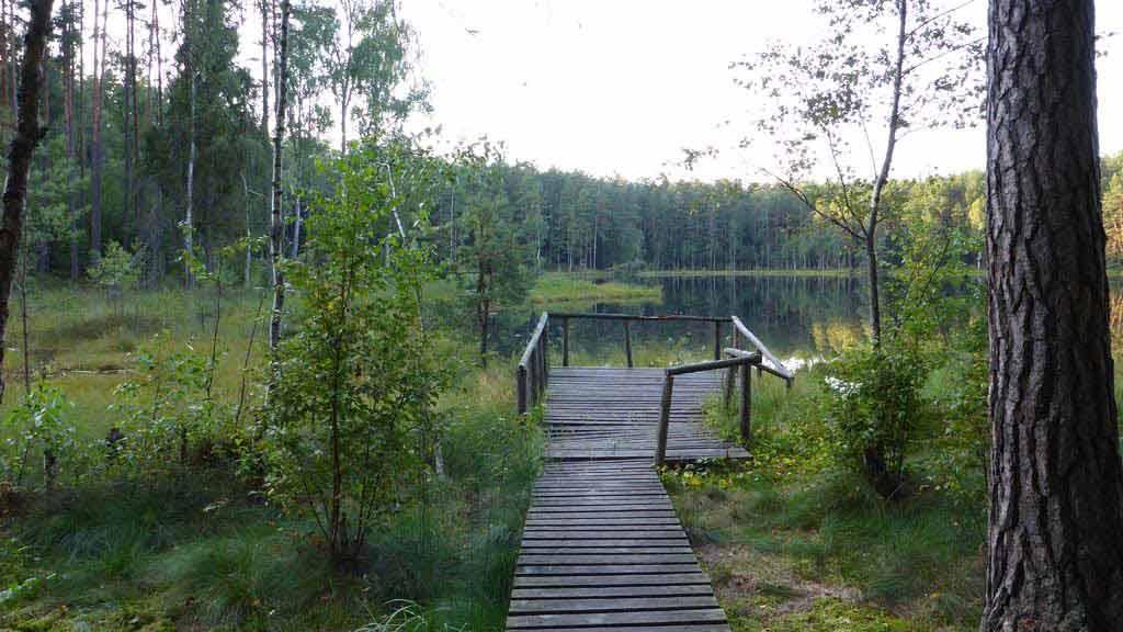 Jeziorko dystroficzne w rezerwacie Zakręt