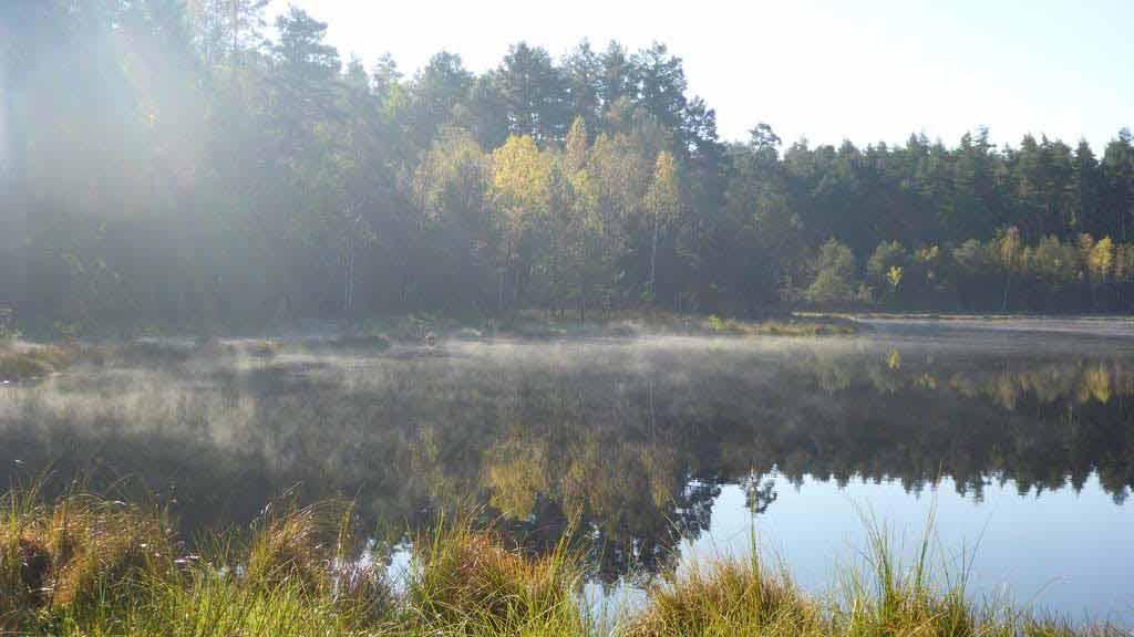 Ścieżka przyrodnicza Krutyń-Rosocha - śródleśne jeziorko dystroficzne