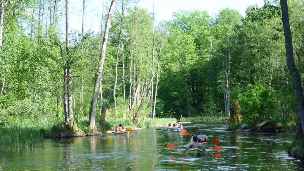 Szlak rzeki Krutyni - spływ kajakowy w rezerwacie Krutynia Dolna - odcinek Krutyń - Ukta