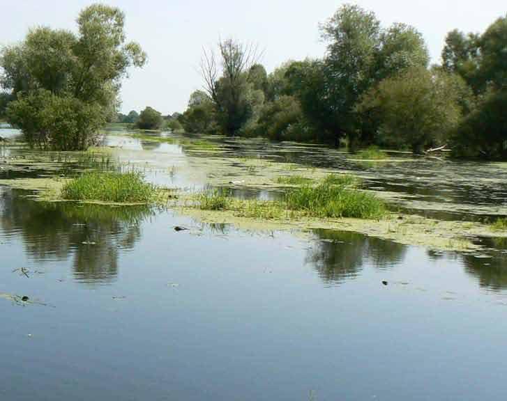 Szlak kajakowy rzeki Biebrzy
