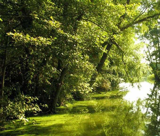 Szlak kajakowy rzeki Czarna Hańcza