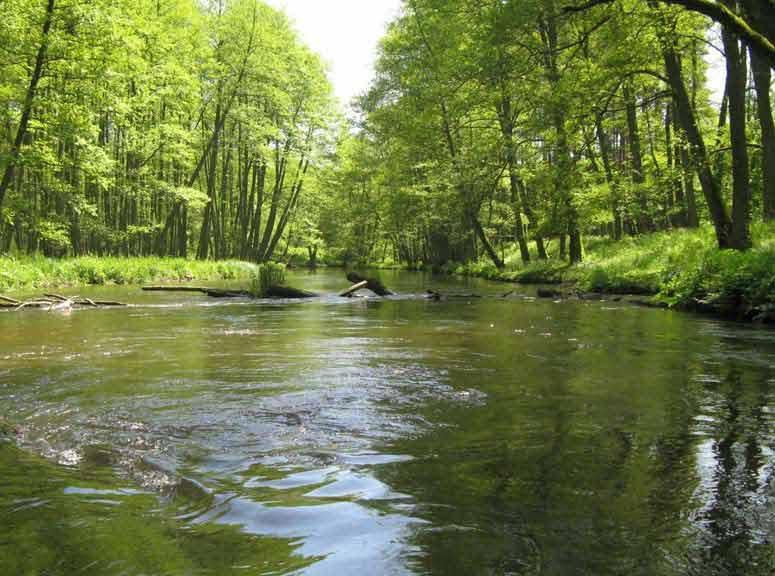 Szlak kajakowy rzeki Rospudy