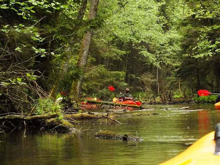 Spływ kajakowy na szlaku rzeki Tejsówki - pokonywanie płycizn i przeszkód