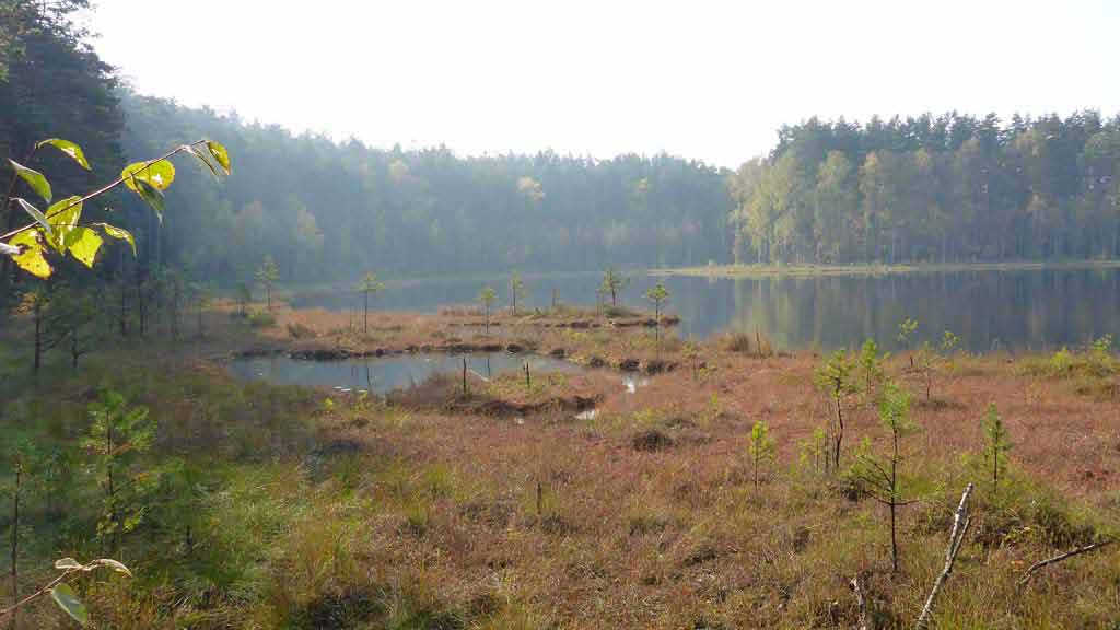 Jeziorka dystroficzne w rezerwacie Zakręt