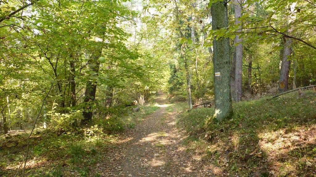 Trasa rowerowa do Parku Dzikich Zwierząt w Kadzidłowie